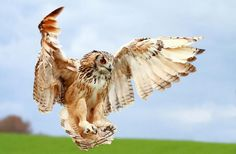 MariaJose: Owls Owls