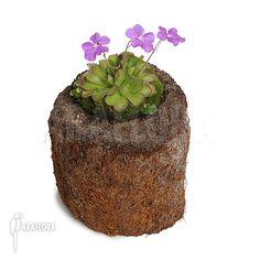 Bijzondere exotische planten voor binnen en buiten zoals orchideeen, palmen etc.