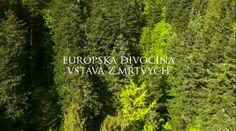 európska divočina