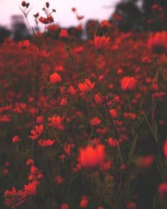 #aesthetic #red Maroon Aesthetic, Red Aesthetic Grunge, Rainbow Aesthetic, Aesthetic Colors, Flower Aesthetic, Aesthetic Images, Aesthetic Backgrounds, Aesthetic Photo, Aesthetic Wallpapers