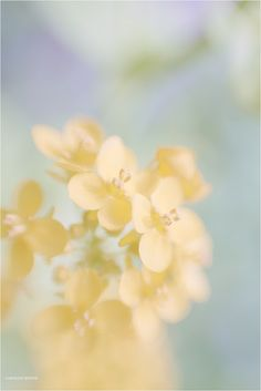 Lensbaby Blog Circle: Yellow | Love Stands Still Photography