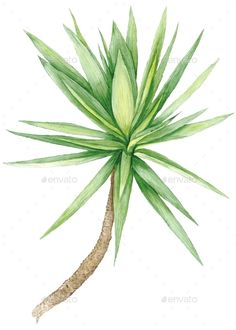 Tropical plant with green leavesisolated on white background