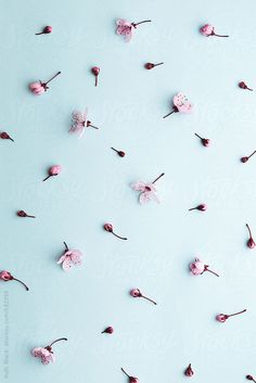 Cherry blossom background by RuthBlack | Stocksy United