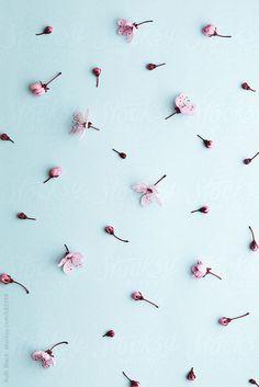 Cherry blossom background by RuthBlack | Stocksy United
