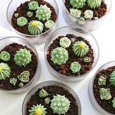 creative dessert #cook #sweet #green #kaktus #cactus #cookie #cake #dessert #succulents #plant #cooking #creative