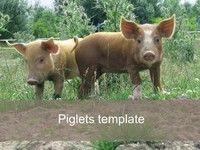 Piglets PowerPoint Template
