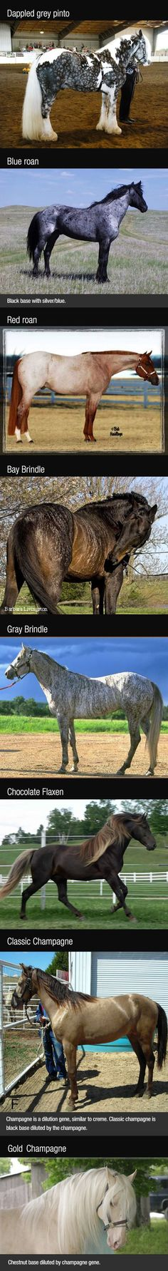 The sad thing is the explanation on most of these and the genetics behind them is WRONG. People's stupidity amazes me. Still pretty horses though.