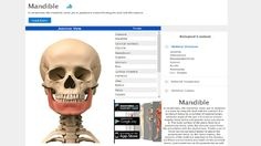 Anatomy Atlas Anatomic.us // is a visual atlas that enables to find most of the information about human anatomy. Exploration of human body with visual effects is so easy now. You can find anatomy atlases and descriptions on this medical library.