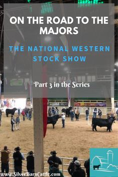"""Our """"On the Road to the Majors: Preparing for a Major Stock Show"""" series continues. Our next interview is with Abby George who will give us tips about the National Western Stock Show in Denver, Colorado."""