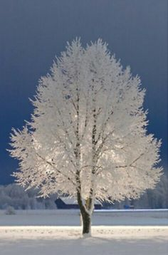 """The only time I've seen trees covered like this was when we had """"frozen fog""""......it was absolutely stunningly beautiful!"""