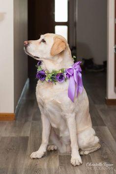 Purple Dog of Honour