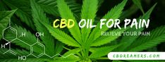 Is There Best CBD Oil For Pain Relief? How It Works? - CBDreamers