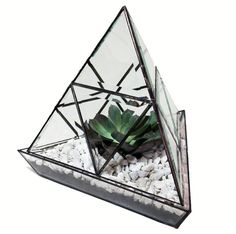 Terrarium- fits great in any space- cool clean lines with a fun quirky vibe