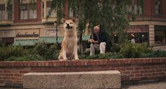 """ Hachi? Hachi? Oh, old thing! You're still waiting. That's right. If it's all right, could I wait with you for the next train? Yeah? Thanks."" - Hachiko: A Dog's Story"