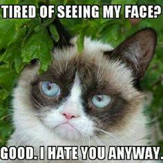 I don't like any of them Ow Don't Ok I don't care Lol Ok Go away They really do Awakened That's dark … Top 25 Grumpy Cat Memes Read Grumpy Cat Quotes, Funny Grumpy Cat Memes, Cat Jokes, Funny Cats, Funny Animals, Cute Animals, Grumpy Kitty, Funny Memes, Hilarious Jokes