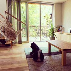 Eikoさんの、IKEA,観葉植物,unico,unico ラグマット,無垢フローリング,ペット,ナチュラル,ハンモック,ハンモック2000,ウッドデッキ,リビング,のお部屋写真