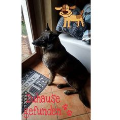 Liebe Nauca  Du lebtest zusammen mit 45 anderen Hunden ca 10 km von Slatina entfernt. Du wurdest von einer tierlieben Rumänien von der Straße in ihr kleines privates Tierheim mitgenommen.  Es lebt auf dem Grundstück niemand ausser den Hunden die werden aber jeden Tag versorgt. Wir bringen seit längerem jeden Tag Futter dorthin dabei schaut der rumänische Tierheimmitarbeiter gleichzeitig ob die Hunde auch wirklich gut versorgt werden da die Frau schon seit längerem im Krankenhaus in Bukarest…