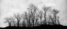 tree silhouette photography - Google Search
