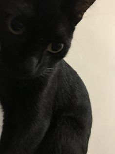 Just perfect TeeLast.com Black Kittens, Black Cat Eyes, Cats And Kittens, Kinds Of Cats, Raining Cats And Dogs, Black Is Beautiful, Black Panther, Cat Art, Bunnies