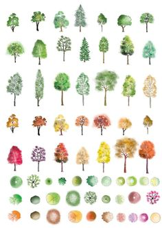 A huge set of colour trees in photoshop finished in different artistic style, showing both summer and autumn colours. These are ready to be dropped