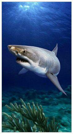 SHARK KING OF THE SEAS!