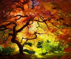 trees of color