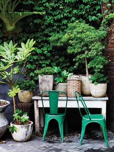 Plants in pots , green garden Outdoor Rooms, Outdoor Living, Outdoor Decor, Outdoor Kitchens, Small Gardens, Outdoor Gardens, Outdoor Plants, Indoor Outdoor, Green Garden