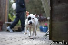 Grace: Beautiful Dog in Need of a Loving Home | The Mark Rogers Pet Photography Blog