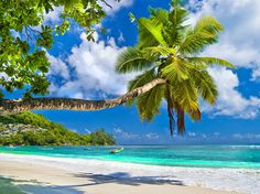 Idyllic tropical scenery - Seychelles Washable Wall Mural ✓ Easy Installation ✓ 365 Days to Return ✓ Browse other patterns from this collection! Island Beach, Rhode Island, Saint Florian, Seychelles Islands, Tahiti Islands, Palm Trees Beach, Beach Shower Curtains, Beach Scenery, Laptop Wallpaper