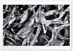 Gnarly Tree HD Wide Wallpaper for Widescreen