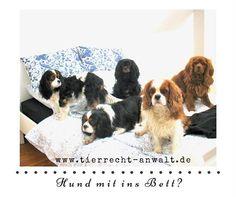 HUNDERECHT Ackenheil http://www.tierrecht-anwalt.de #Hundebiss #Wesenstest #Maulkorb