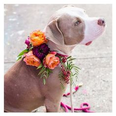Hey there gorgeous pup! #puppy #beautiful #love #cute #bestie #spring #florals