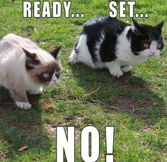 Top 40 Funny Grumpy cat Pictures #Funniest #Quotes