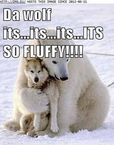 Funny animal memes, cute animals with funny captions, cute animal quotes, funny pictures Funny Dog Captions, Animal Captions, Funny Animals With Captions, Funny Animal Quotes, Funny Pictures With Captions, Animal Jokes, Picture Captions, Cute Funny Animals, Funny Animal Pictures