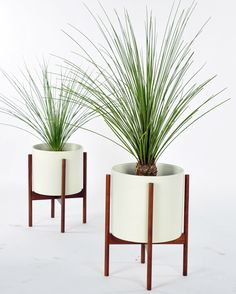 Case Study planters by Modernica.