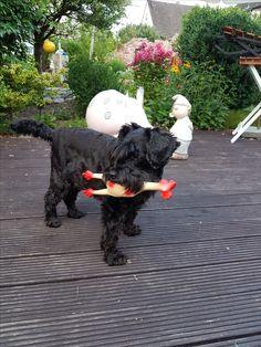 Hunde Foto: Paul Dieter und Chipsy - Meine Chipsy ist ne Bestie lol Hier Dein Bild hochladen: http://ichliebehunde.com/hund-des-tages  #hund #hunde #hundebild #hundebilder #dog #dogs #dogfun  #dogpic #dogpictures
