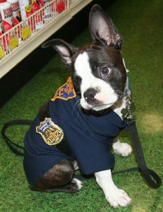 Boston Terrier Costume - Cop