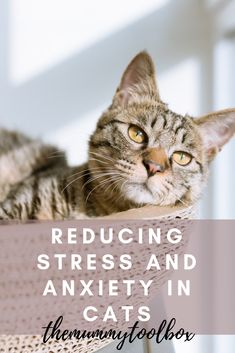 Anxiety in cats, as in humans, can damage their well-being and health. A cat that is under stress can start showing behavioural problems, health issue. Cat Care Tips, Pet Care, Pet Tips, What Causes Stress, Ways To Reduce Anxiety, Stress And Anxiety, Anxiety Cat, Separation Anxiety, Cat Boarding