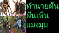 ฝันเห็นแมงมุม (พร้อมเลขเด็ด)