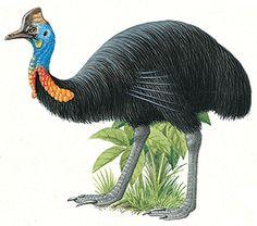 December Christmas Memories - My Christmas Bird - News - #bubblews #Loyal2U #cassowary #westPapua