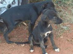 """""""O GRITO DO BICHO"""": ONG impede abandono de cadela e cinco filhotes em ..."""