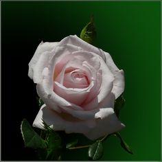 ¡¡Feliz Lunes, feliz comienzo de semana!!, Cortinas Ibañez les da Un consejo, levántense con una sonrisa y serán más felices. https://www.facebook.com/pages/Cortinajes-Ibañez/285146811496396