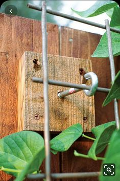 Garden Trellis, Garden Beds, Trellis On Fence, Garden Fences, Cheap Garden Fencing, Trellis Ideas, Diy Trellis, Hops Trellis, Garden Fence Paint