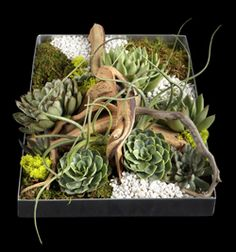 """""""Succulent Landscape"""" From Ovando's Sustainable Collection. I really want this for my desk... so unique!"""