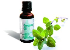 7 Best Essential Oils for bronchitis and Pneumonia that will help you breathe easily - Remedies Essential Oil For Pneumonia, Essential Oils For Asthma, Oregano Essential Oil, Doterra, Herbs For Depression, Oregano Oil Benefits, Natural Asthma Remedies, Corona, Tips