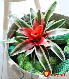 Staggering Tips: Artificial Plants Office Leaves artificial flowers wreath.How To Arrange Artificial Flowers artificial plants cheap products. Small Artificial Plants, Artificial Plant Wall, Artificial Flowers, Inside Plants, Cool Plants, Garden Plants, Indoor Plants, Indoor Bamboo, Indoor Trees