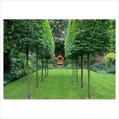 Carpinus betulus 39 frans fontaine 39 zuilvormige haagbeuk bomen zuilvormige bomen mar chal - Allee steen ...