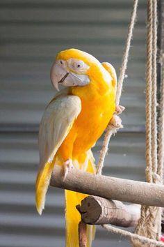 Rare Birds, Exotic Birds, Colorful Birds, Rare Animals, Animals And Pets, Beautiful Creatures, Animals Beautiful, Most Beautiful Birds, Funny Animal Photos
