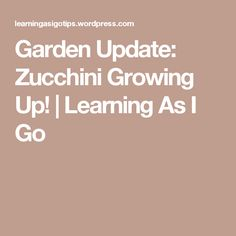 Garden Update: Zucchini Growing Up!   Learning As I Go