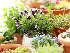 Marta Malheiro, Author at Revista Jardins - Página 3 de 5 Benefits Of Gardening, Gardening Tips, Small Space Gardening, Raised Beds, Garden Inspiration, Backyard, Patio, Container Gardening, Small Spaces